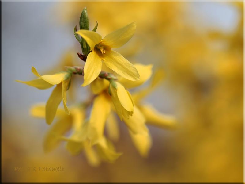 noch mal gelb leuchtend