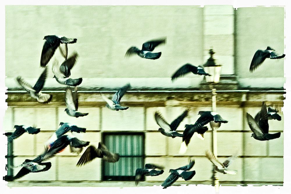 Noch mehr Birdies