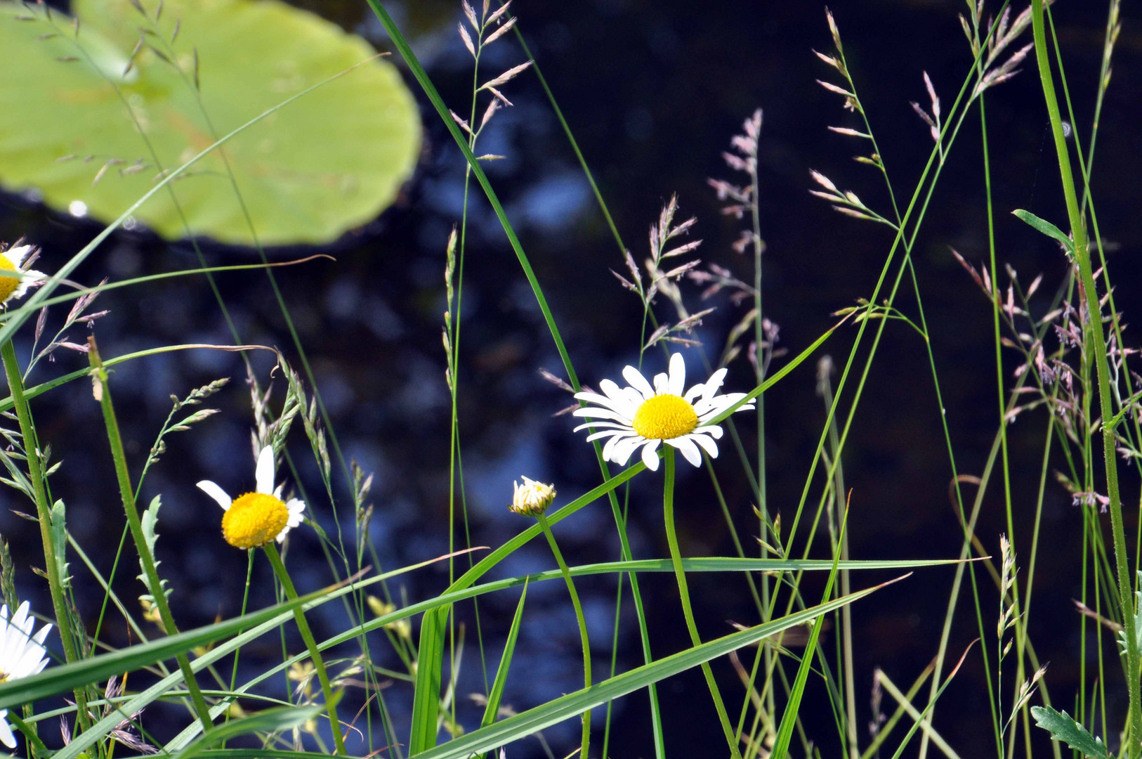 ... noch mehr Blumenimpressionen Frühlingsfest Schloss Rheda