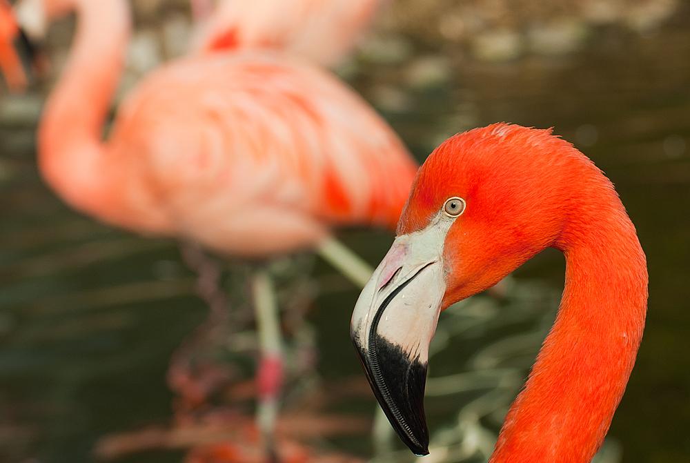 noch mehr Flamingos