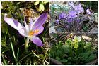 Noch mehr Frühling...
