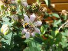 Noch mehr Honig