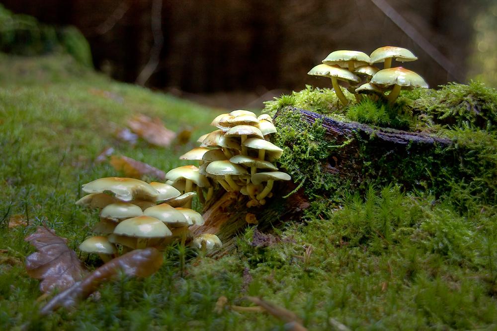 noch mehr Pilze