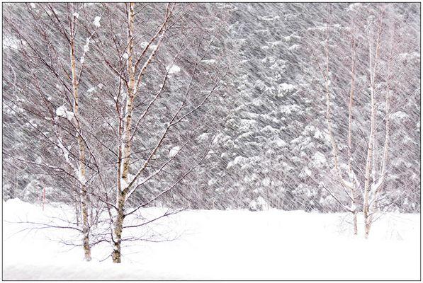 Noch mehr Schnee