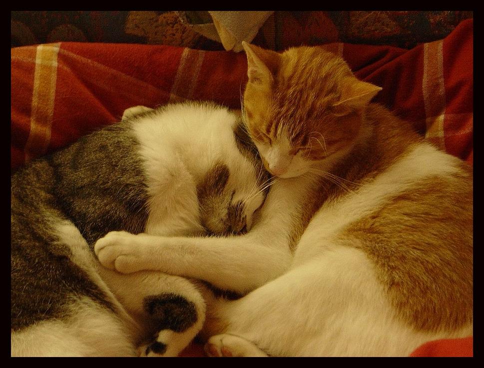 """Noch mehr """" Wildkatzen """" :-))"""