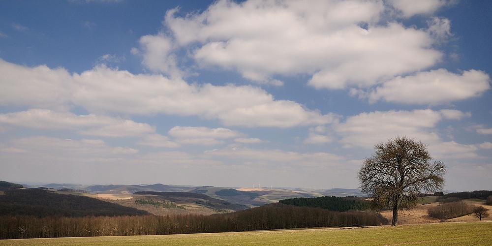 Noch nicht grün aber schneefrei ist die Pfalz, eine tolle Aussicht...