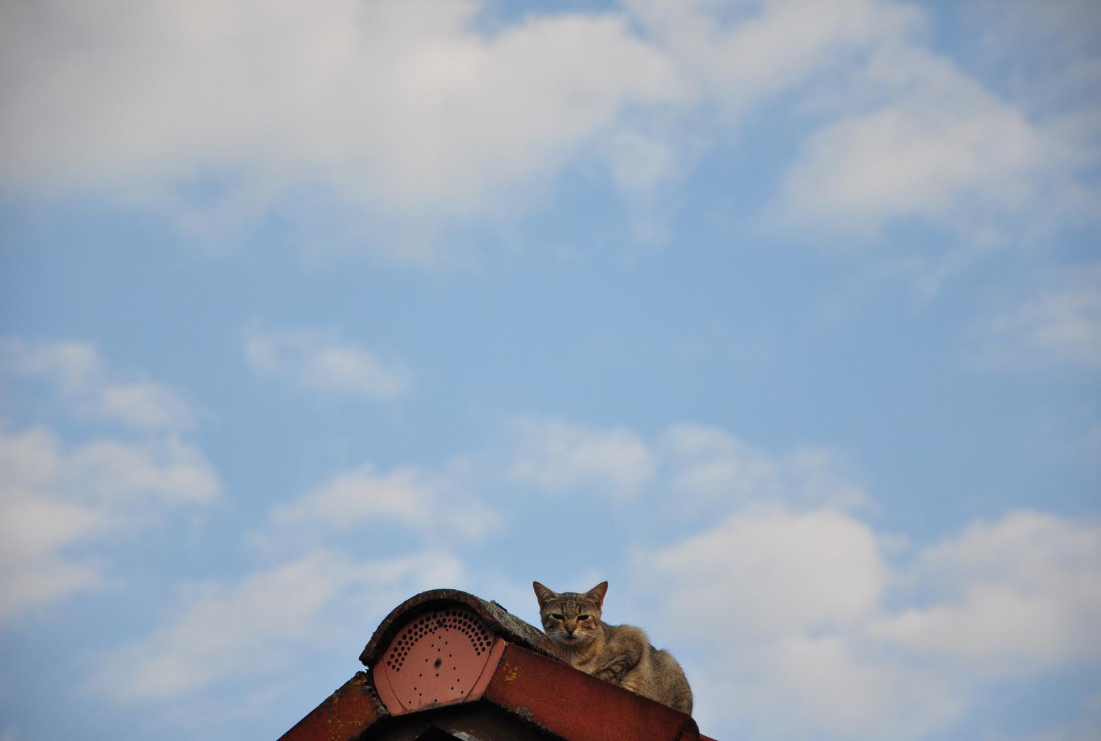 Noch nie eine Katze auf nem Hausdach gesehen???