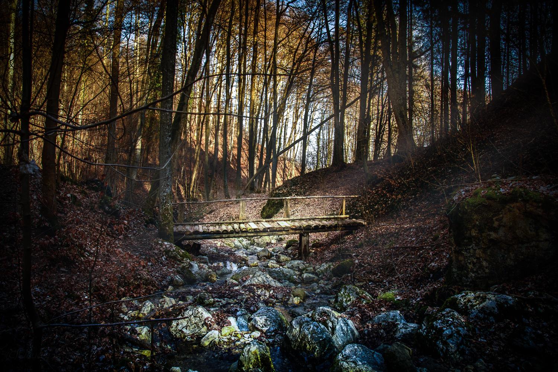 Noch ruht der Wald