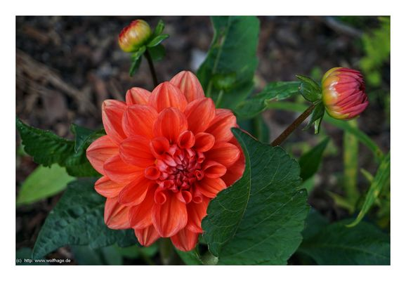 Noch schnell ein Mittwochsblümchen :-)