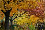 Noch schnelll ein Herbstbild, bevor ..