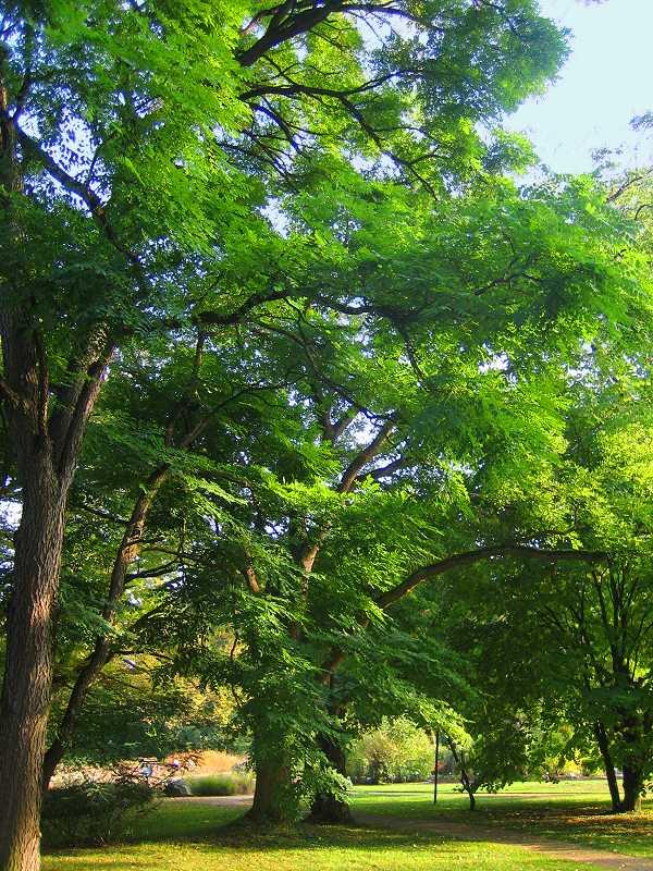 noch sind die Bäume saftig grün....
