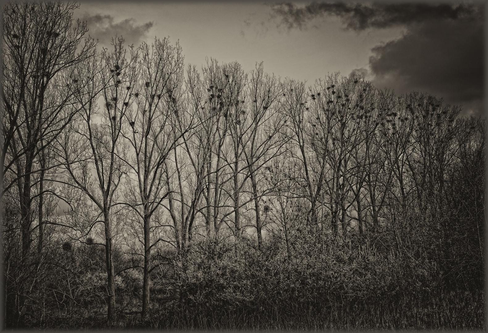 Noch sind die Nester leer - Les nids sont encore vides
