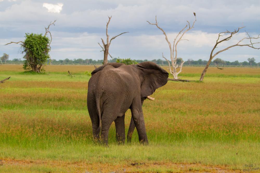 Noch so weit zu laufen... (Afrikanischer Elefant)