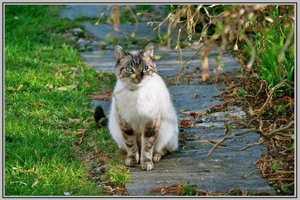 Noch vor 15 Minuten sprang er putzmunter durch den Garten