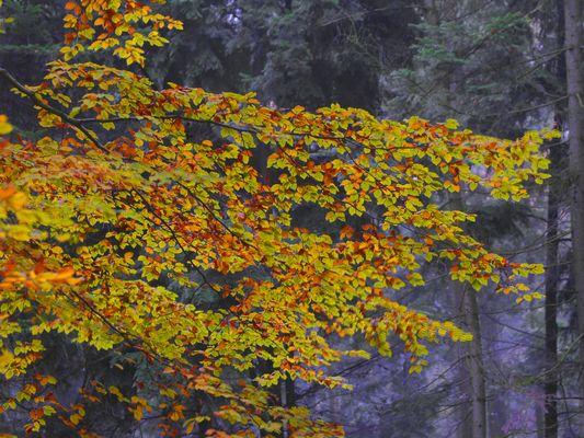 Noch zeigt der Herbst Farbe!