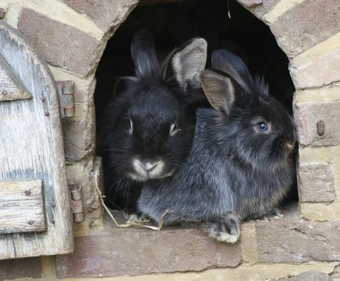 Noch zwei Kaninchen