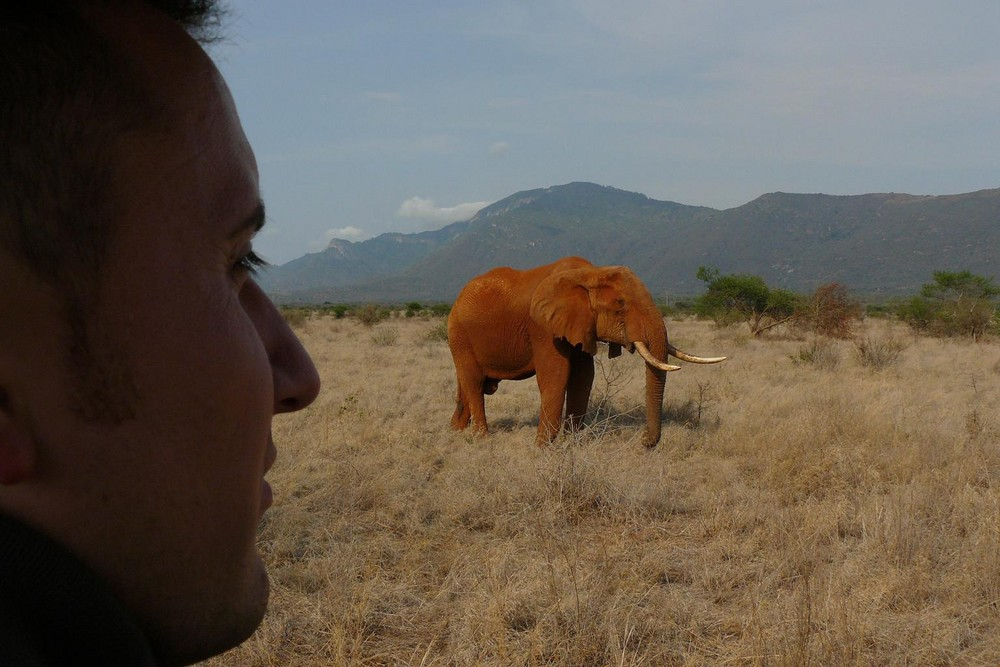 ...nochmal der Elefantenbulle...