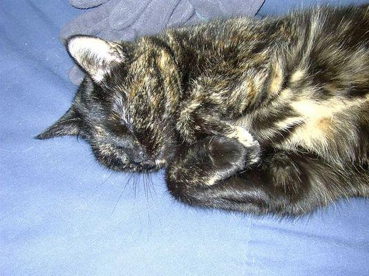 Nochmal eine Schlafkatze!