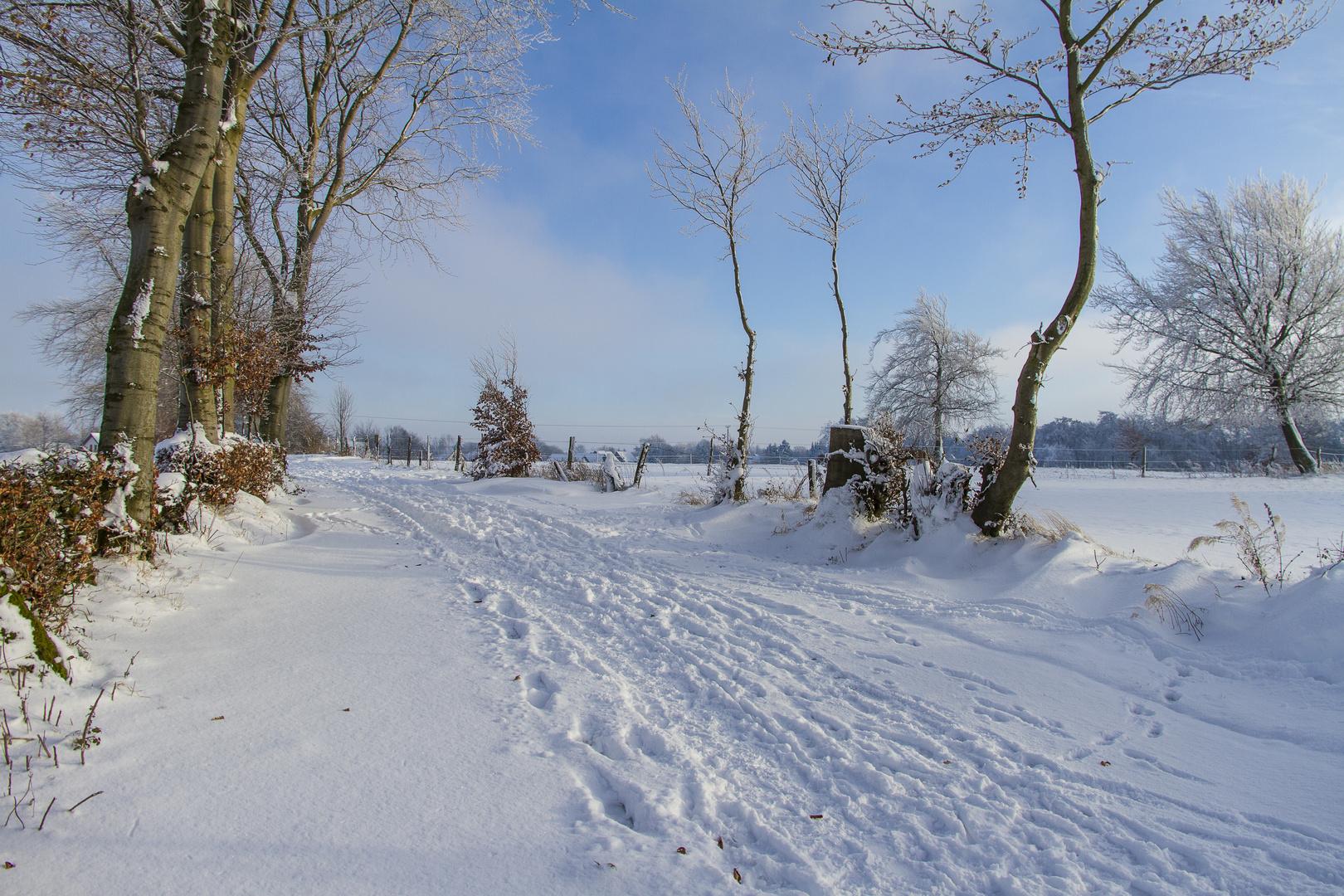 nochmal Feldweg in Simmerath-Lammersdorf