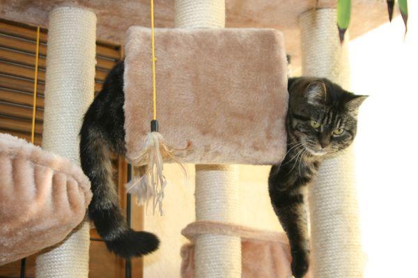 Nochmal im Katzenbaum zum spielen.