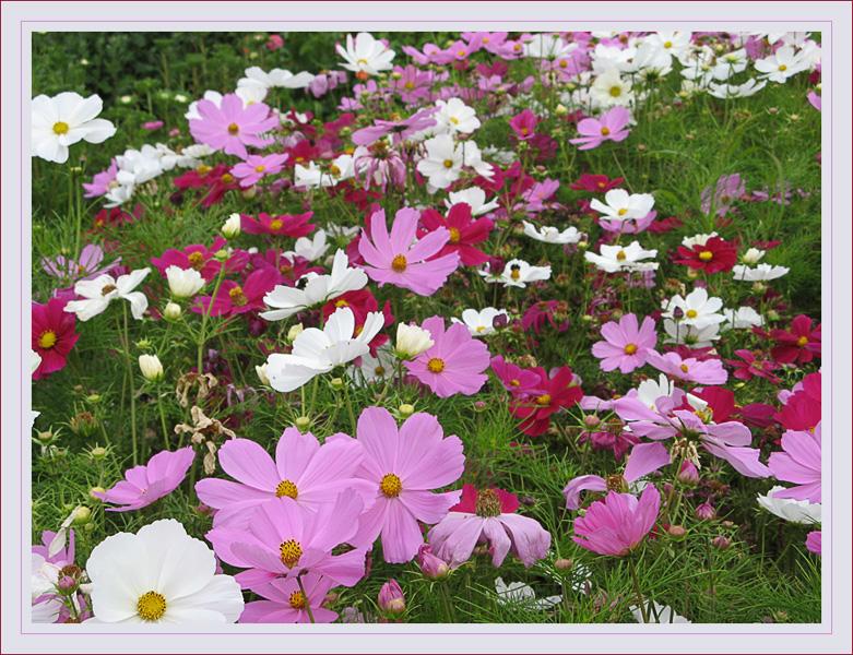 nochmal in Sommerblüten schwelgen