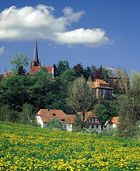 - nochmal Löwenzahn - (Frankenberg)