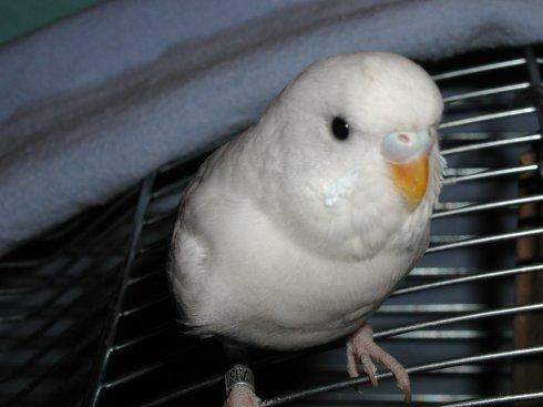 Nochmal mein kleines Hühnchen, ich find das Bild ja soooooo süß =)