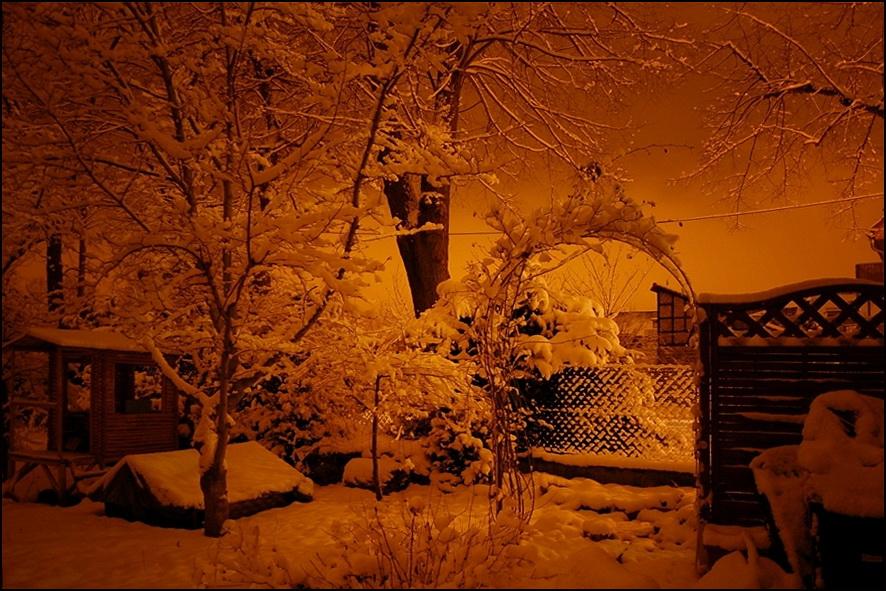 nochmal nachts im Garten