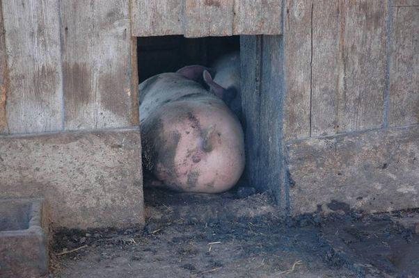 Nochmal Schwein gehabt!!