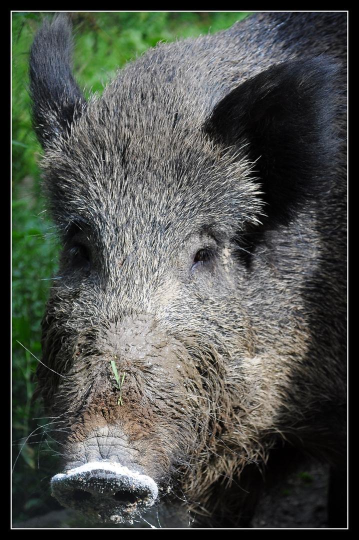 nochmal schwein gehabt.......
