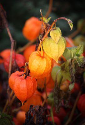 nochmals Herbstfarben...