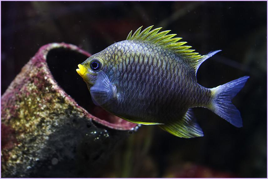Noch´n Fisch....