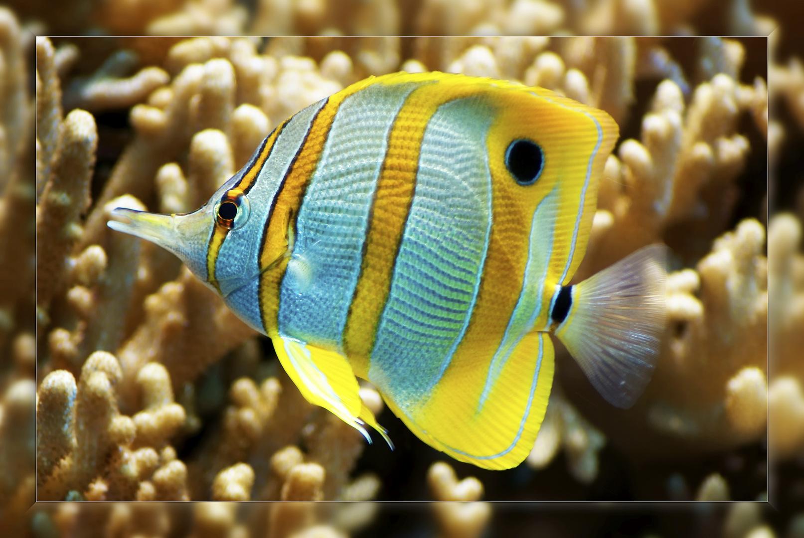 Noch´n Fisch