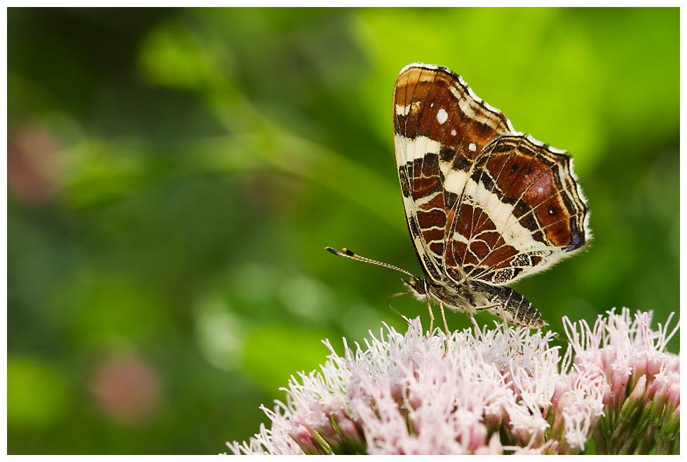 ...noch´n Schmetterflatter