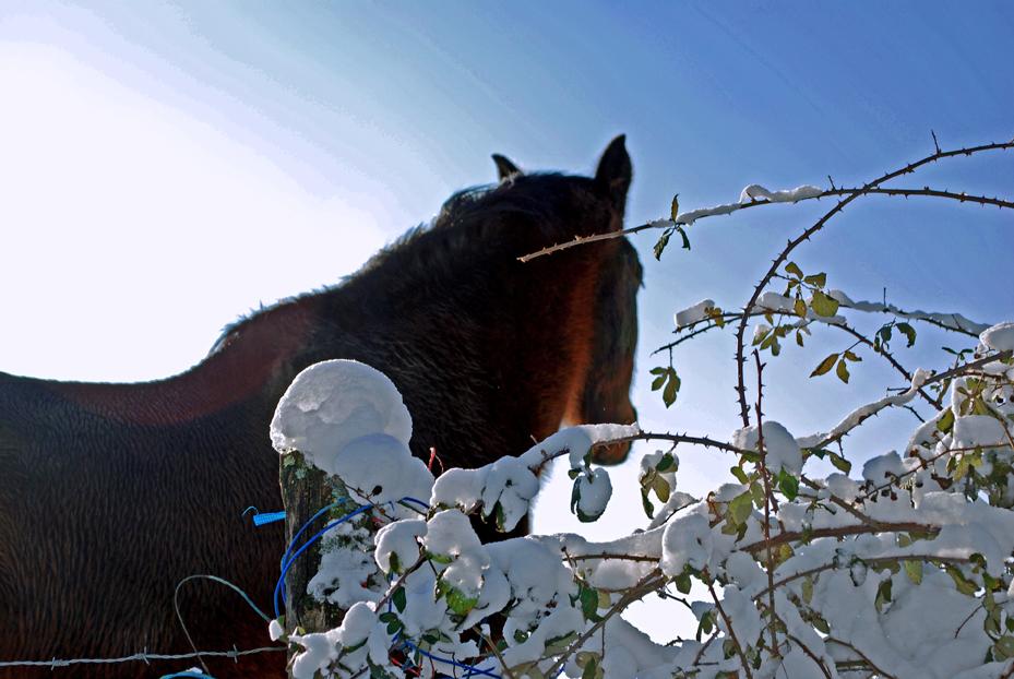 Noël blanc dans le Bigey