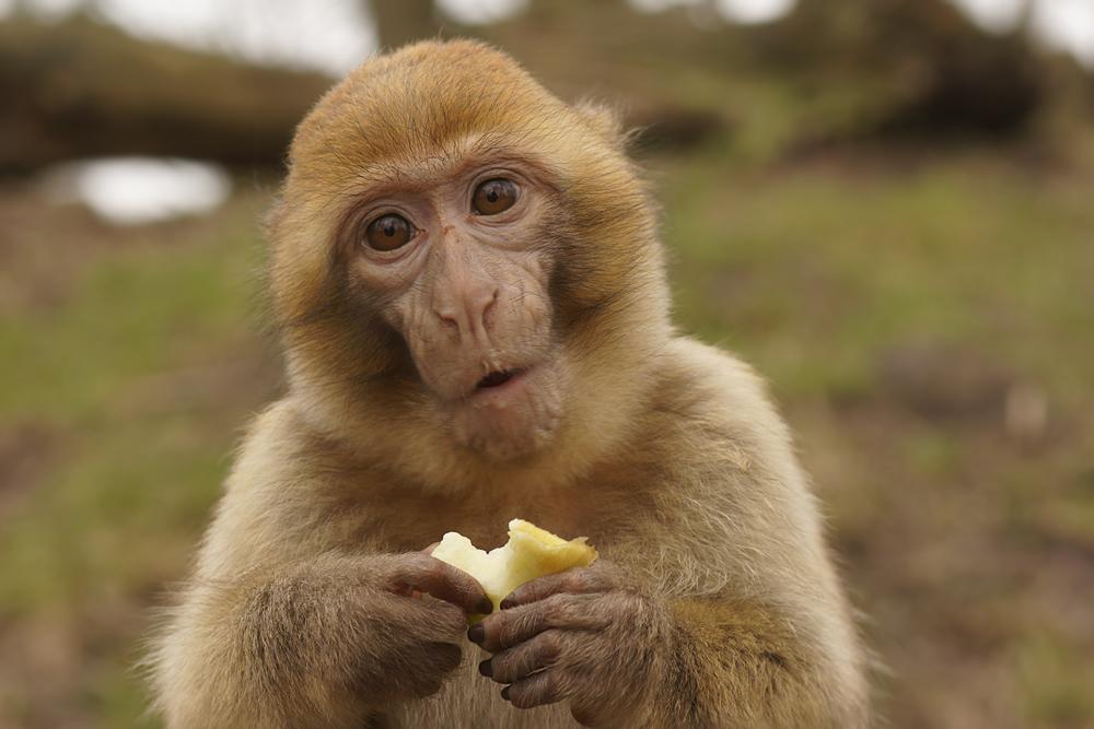 Nöööö, das ist mein Apfel....