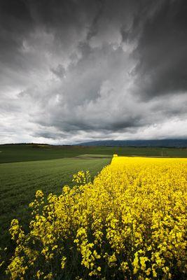noir de jaune