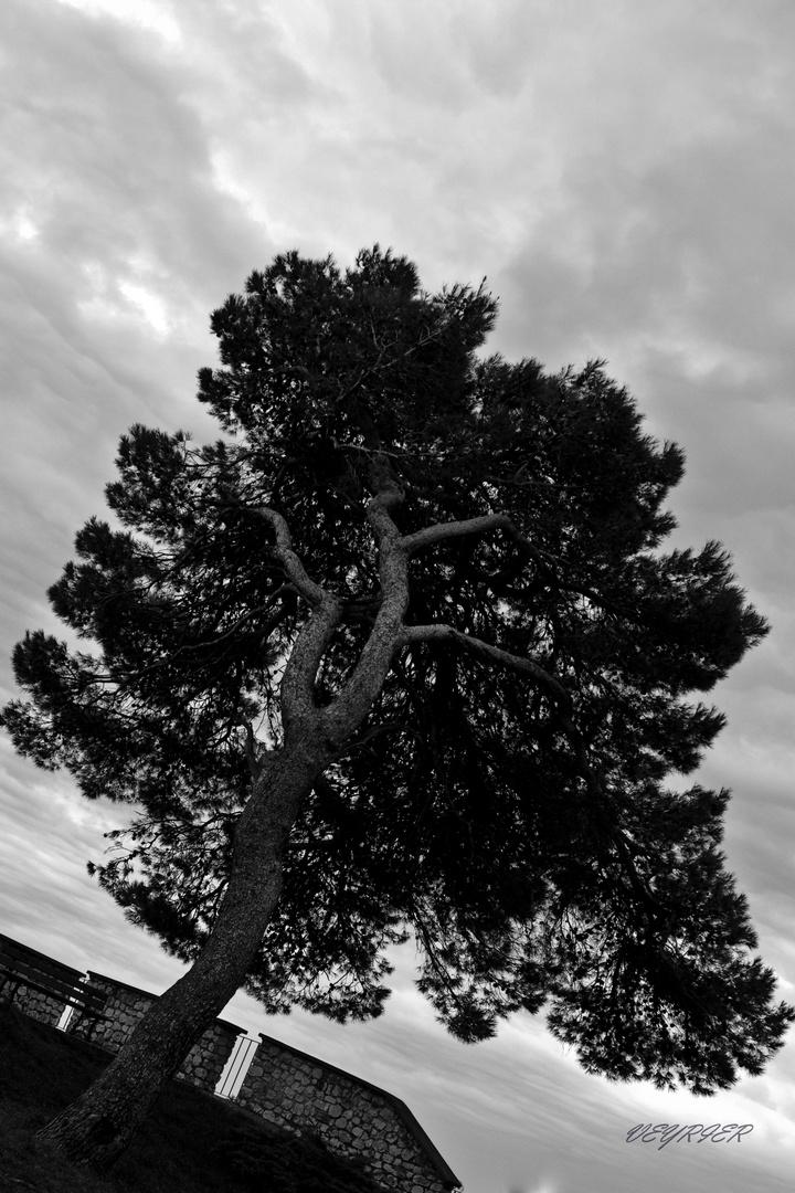 noir et blanc un jour d'orage