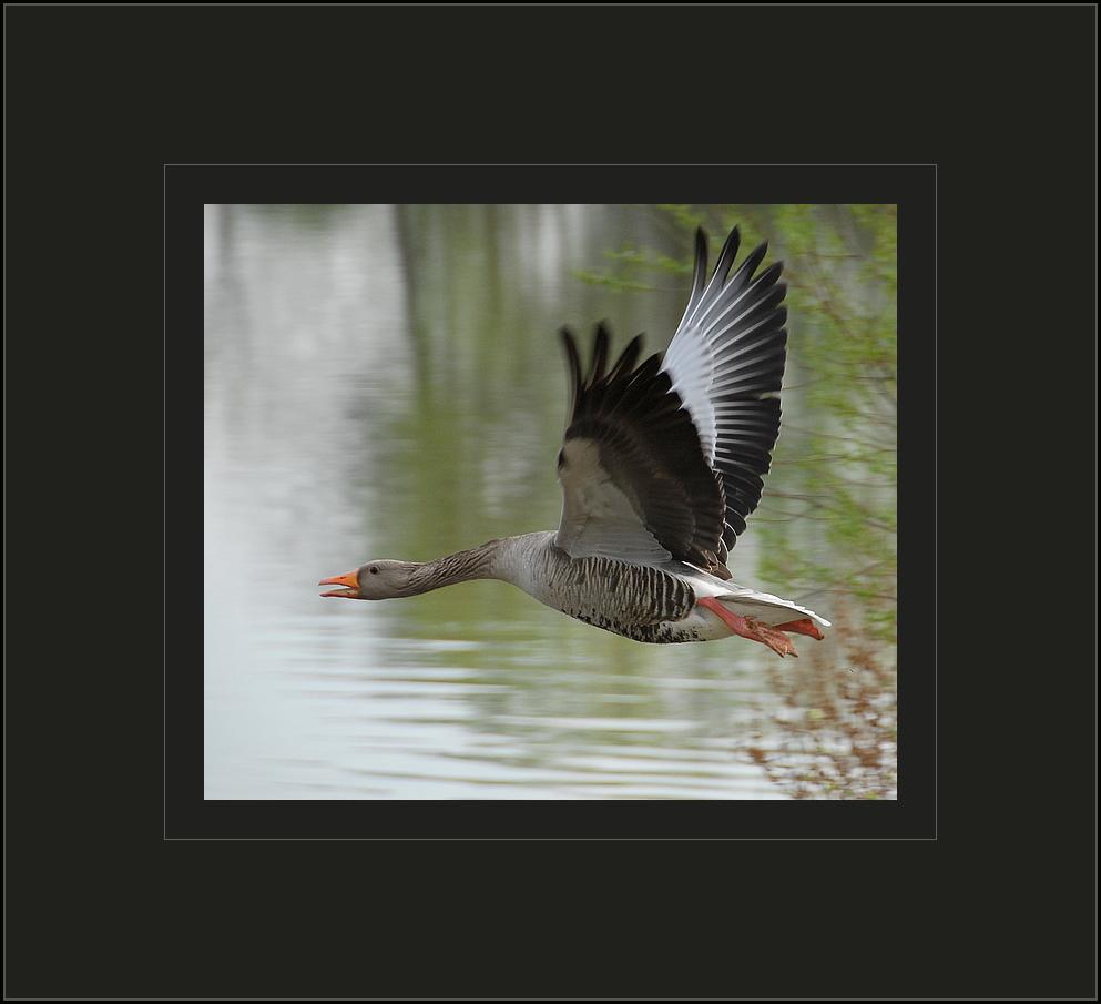 noisy wings.....