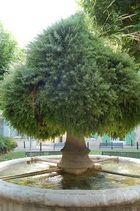Non, ceci n'est pas un arbre !