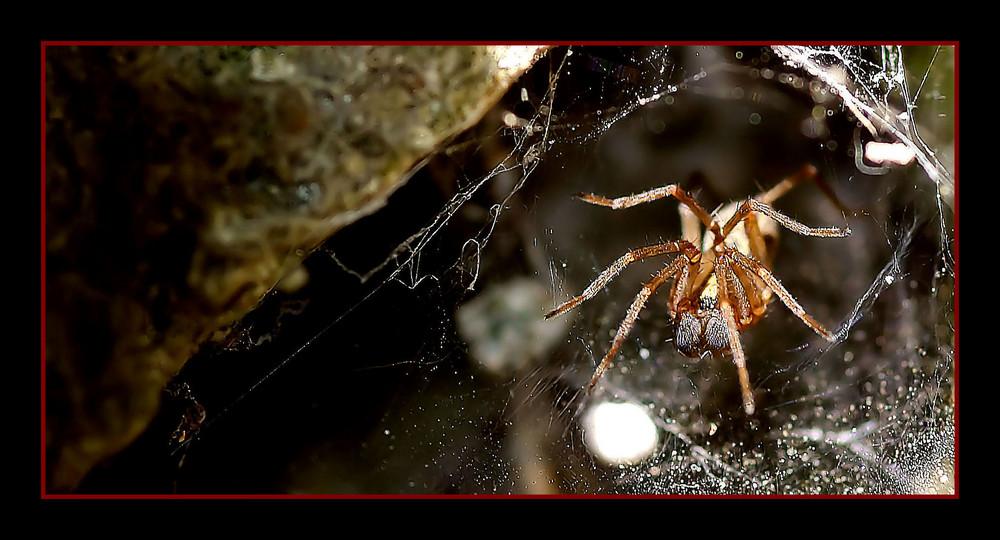 Non si cava un ragno dal buco......