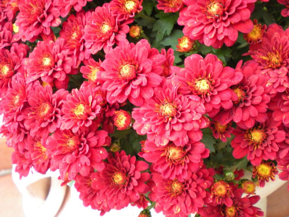 Non solo fiori da cimitero foto immagini piante fiori for Solo piante