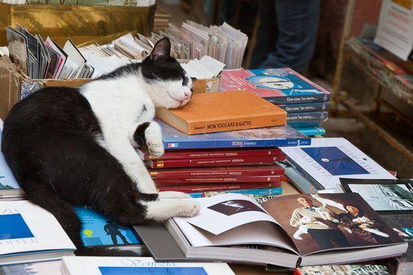 Non Toccare il Gatto - Berühren Sie nicht die Katze