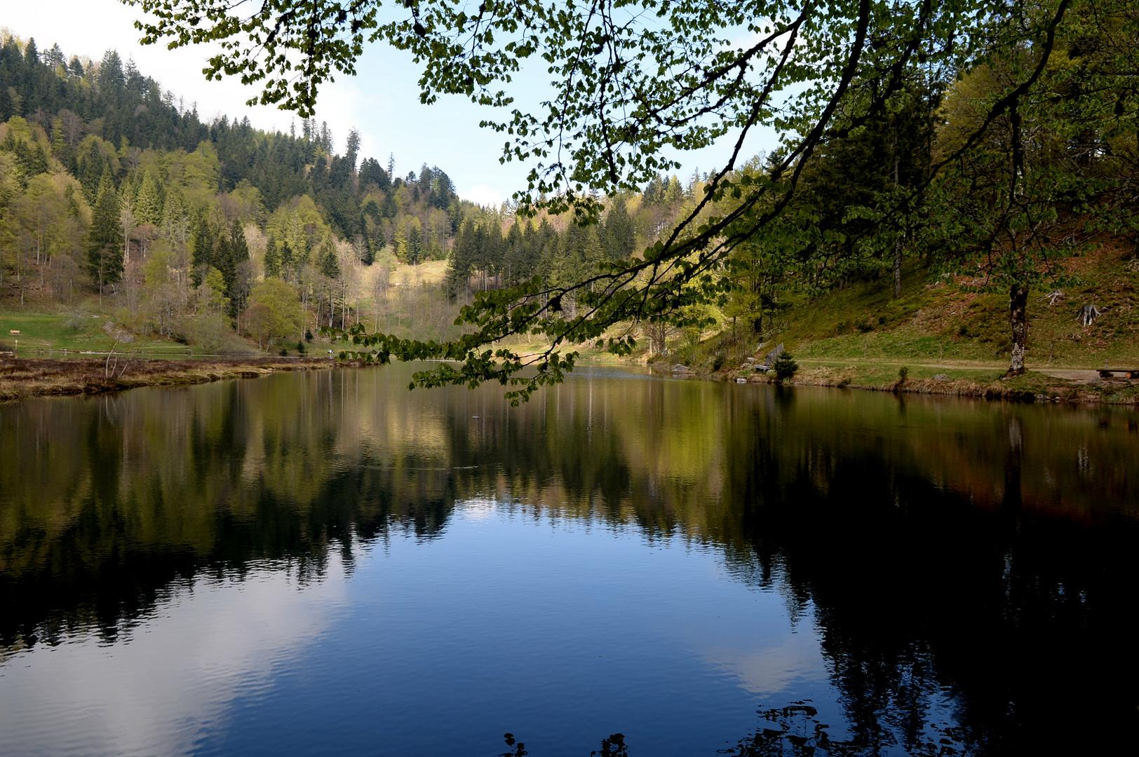 Nonnenmattweiher Südschwarzwald