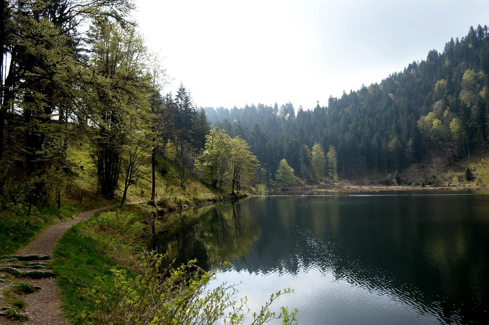 Nonnenmattweiher Südschwarzwald I
