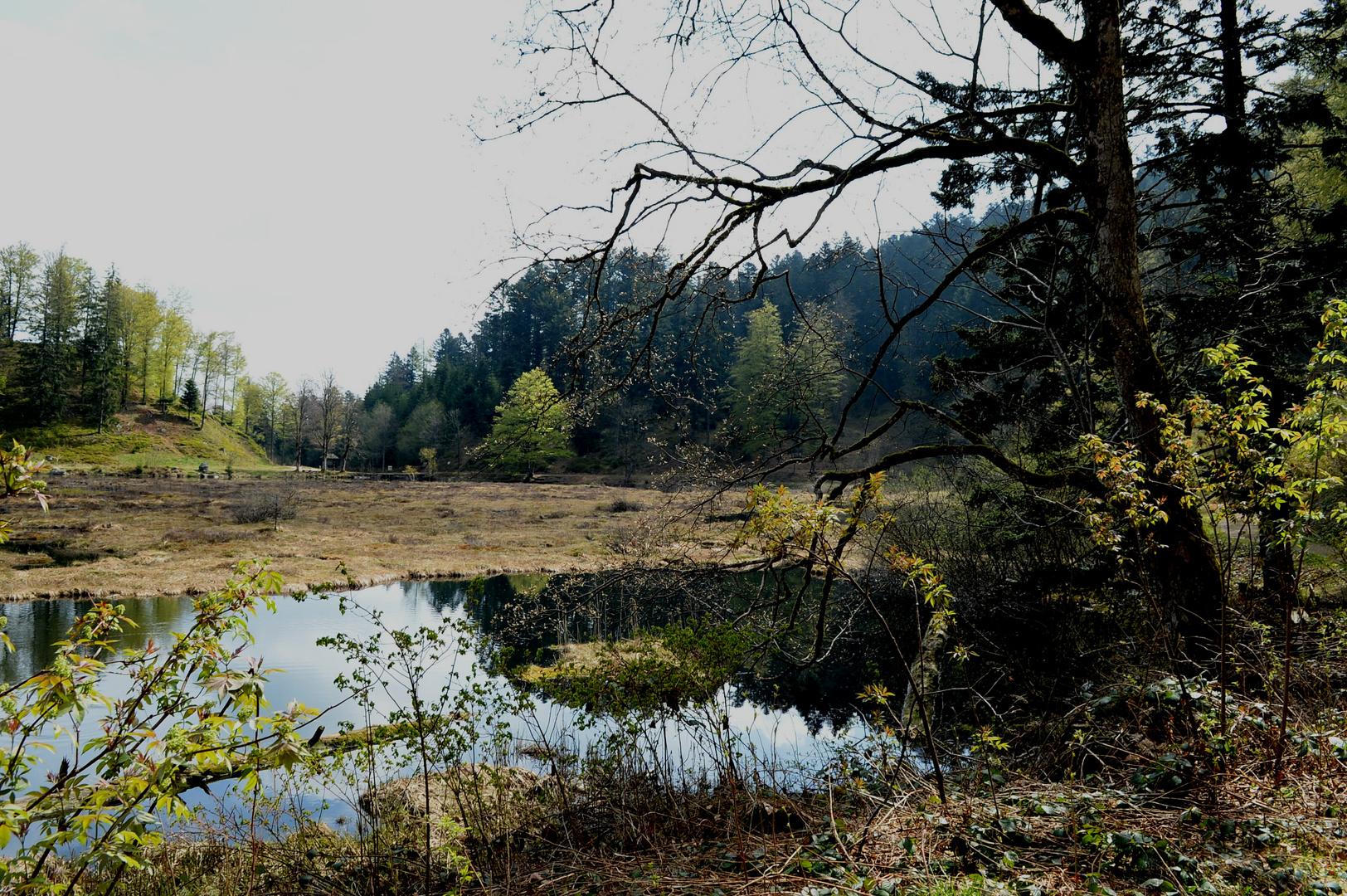 Nonnenmattweiher Südschwarzwald II