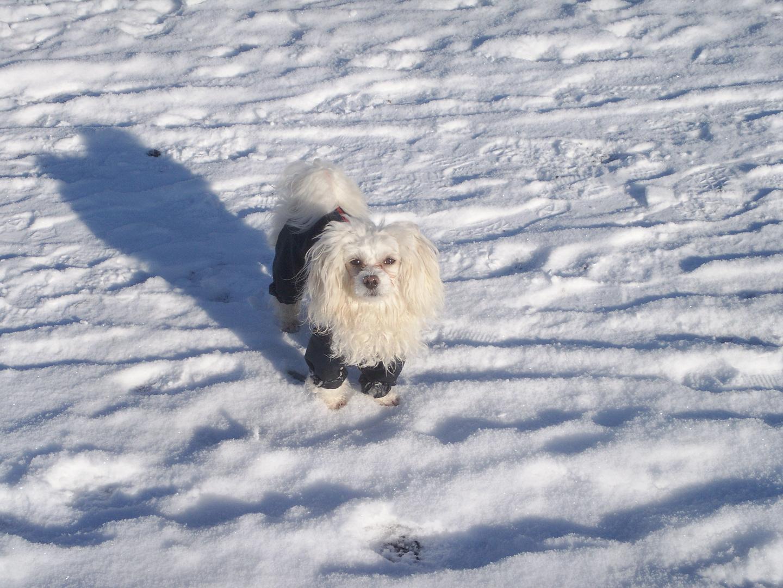 Nora im Schnee