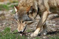 Norbert Wolf