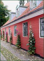 Nord-Jütland im Farbenrausch 4