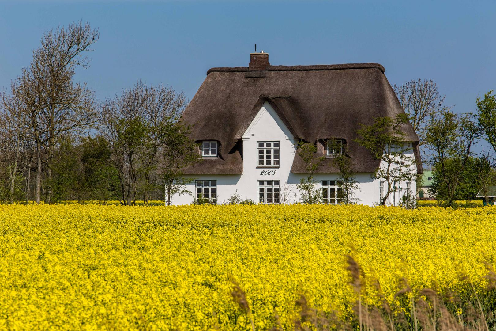 Nordfrieslands Felder in Blütenpracht